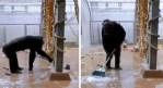 Chimpancé hace el aseo, limpiando y barriendo su jaula