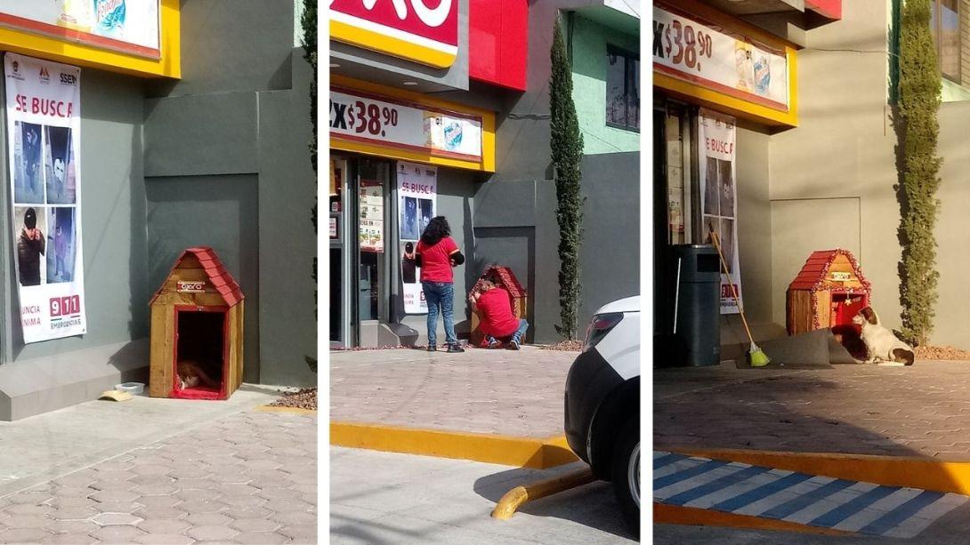 Tienda-Oxxo-le-construye-casita-a-perrito-de-la-calle