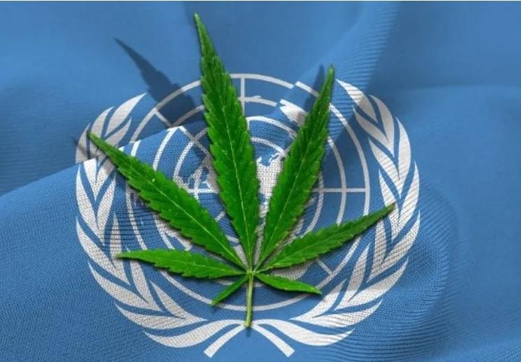 cannabis-reconocida-por-organizaciones-mundiales