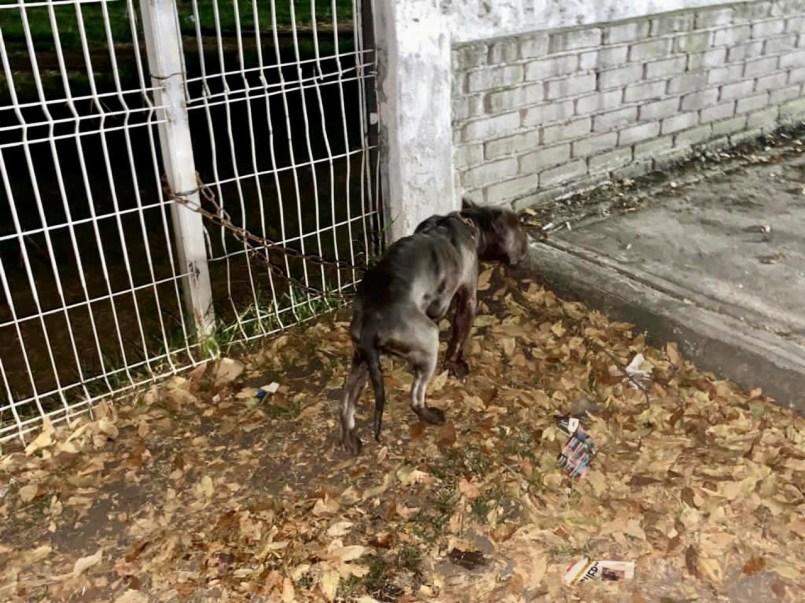 rescatan-a-perrito-en-parque-toluca