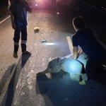 viral-moto-atropella-a-bebe-elefante-cuando-cruzaba-la-carretera-160494