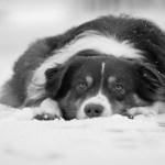 Lomito pierde la vida congelado tras quedar a la intemperie