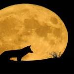 Luna Lobo, cómo y cuándo ver el primer fenómeno astronómico del 2021