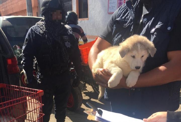 venta-ilegal-de-animales-Toluca