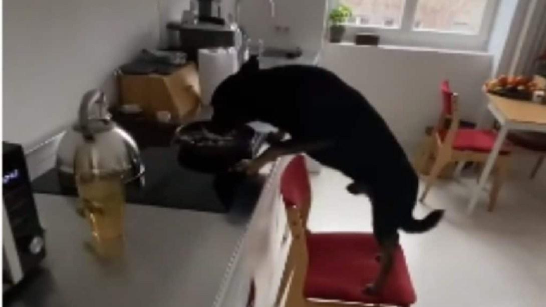 perrito-mueve-silla-para-alcanzar-comida