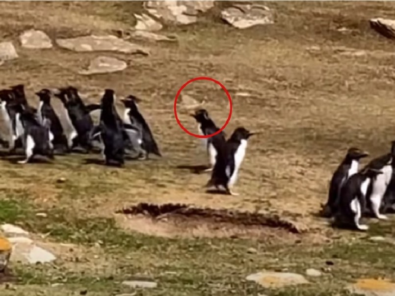pinguino-se-equivoca-de-familia