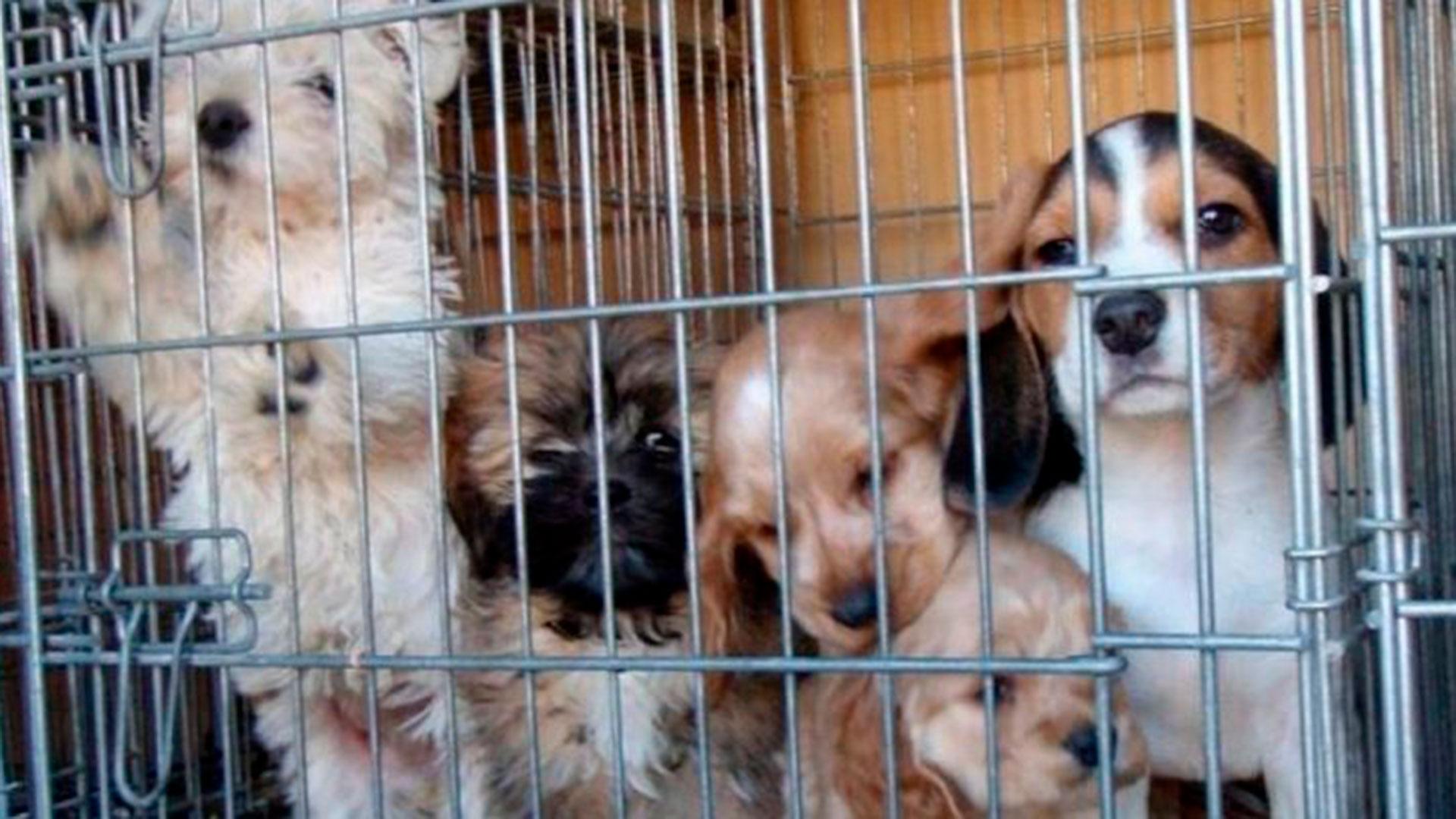 venta-de-animales-via-publica
