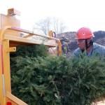reciclaje-arboles-de-navidad-edomex-2021