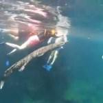 Video II Cocodrilo nada con turistas en cenote de Tulum
