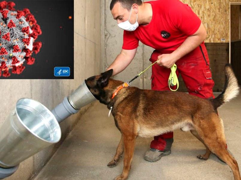 perros-detectan-covid