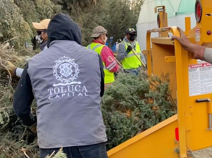 Este fin de semana concluyó la campaña de recolección de árboles de Navidad naturales implementada por la Dirección General de Medio Ambiente de Toluca, lográndose un acopio de más de mil ejemplares que fueron convertidos en composta.
