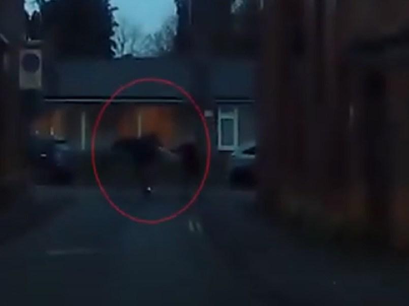 Ladrón es golpeado con unas muletas por una mujer de 77 años || VIDEO