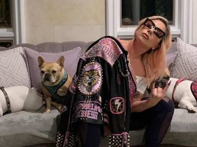 Video del ataque al paseador de perros de Lady Gaga