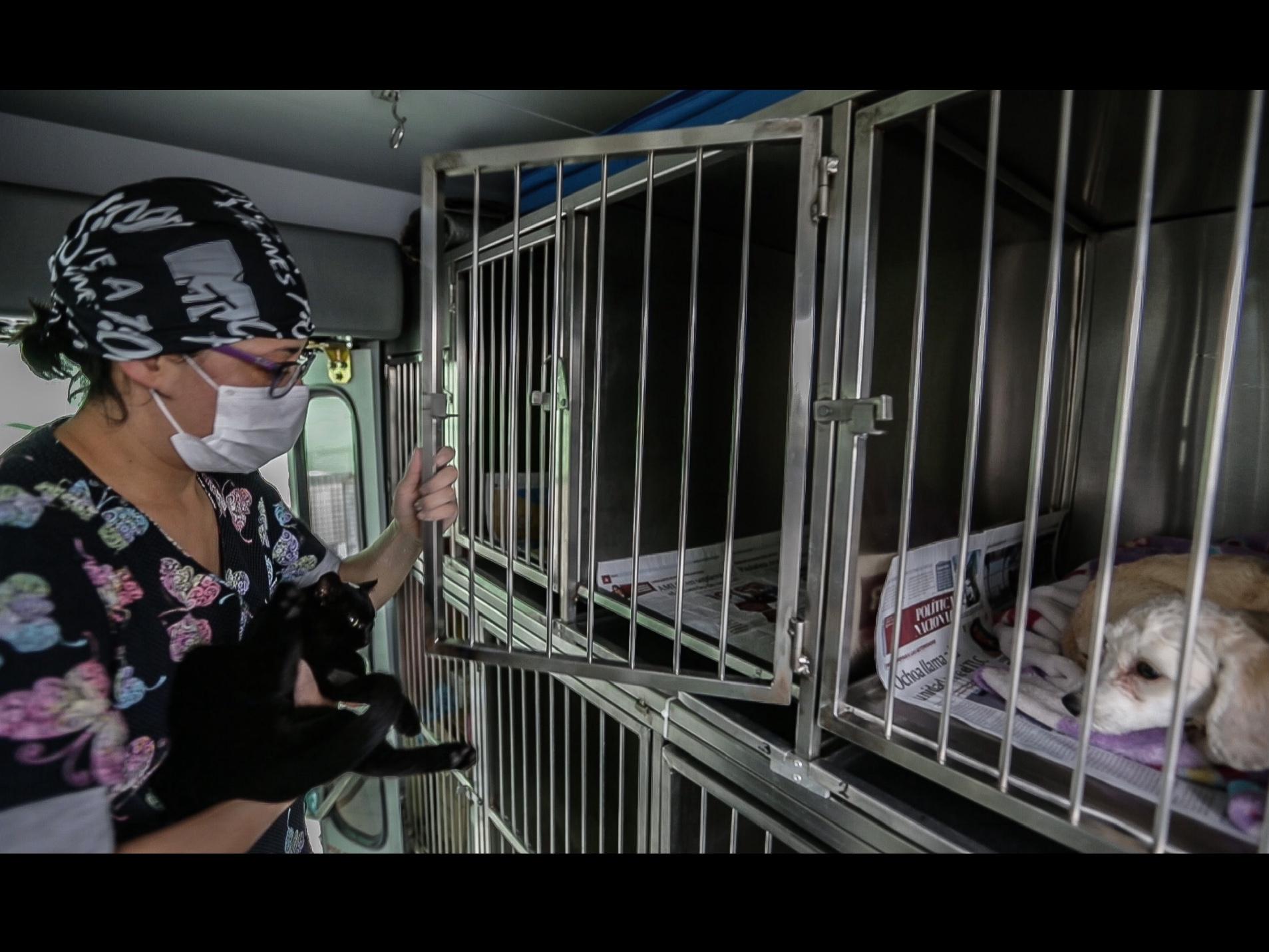 toluca-esteriliza-a-tus-perros-y-gatos-en-la-uaemex-paso-a-paso-160494