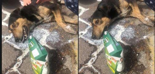 toluca-siguen-casos-de-envenenamiento-a-perritos-sauces-160494
