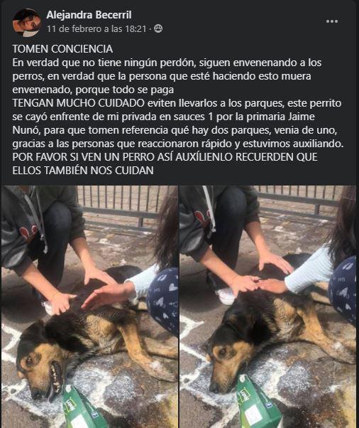 toluca-siguen-casos-envenenamiento-perritos-sauces-160494